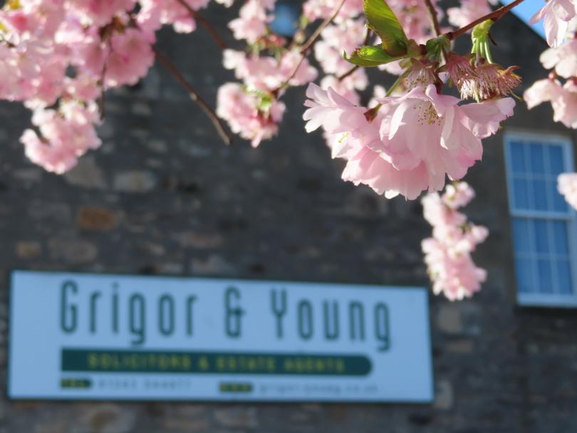 Tree blossom at St Giles Road, Elgin, Moray.